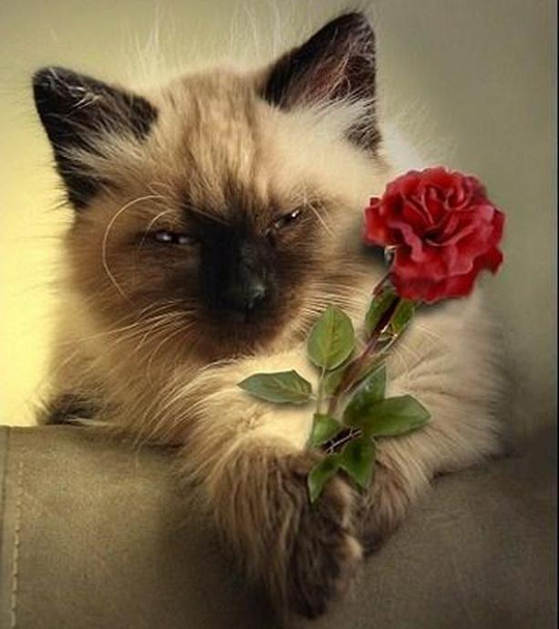 Нажмите на изображение для увеличения Название: кот с цветком.jpeg Просмотров: 46 Размер:104.8 Кб ID:236894